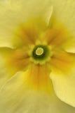 Retrato salvaje de la macro de la primavera Foto de archivo libre de regalías