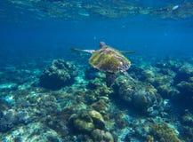 Retrato subacuático de la foto de la tortuga del mar Imagenes de archivo