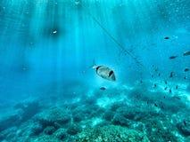 Retrato subaquático de um peixe Imagens de Stock