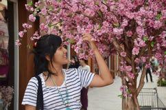 Retrato tailandês das mulheres com a árvore de cereja ricamente de florescência, flor de sakura Imagens de Stock