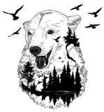 Retrato tirado mão do urso, conceito dos animais selvagens Foto de Stock