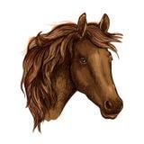 Retrato triste agraciado del caballo de Brown Fotografía de archivo libre de regalías