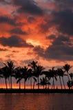Retrato tropical do por do sol Foto de Stock