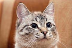 Retrato um gato Imagem de Stock