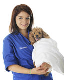 Retrato voluntario del veterinario Fotografía de archivo