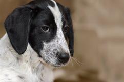 Retrato y texto tristes del perrito Fotografía de archivo libre de regalías