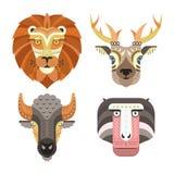 Retratos animais Fotografia de Stock