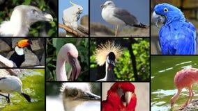 Retratos de los pájaros, collage almacen de metraje de vídeo