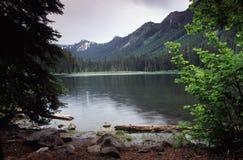 Retratos de Oregon imagem de stock royalty free