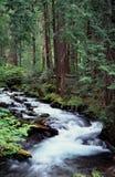 Retratos de Oregon Fotos de Stock Royalty Free