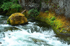 Retratos de Oregon Foto de Stock Royalty Free