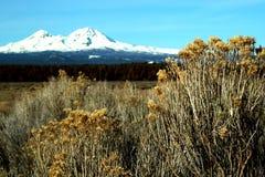 Retratos de Oregon fotografía de archivo