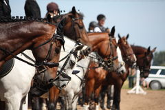 Retratos del caballo durante la competencia Imagen de archivo libre de regalías