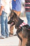 Retratos del perro Fotografía de archivo libre de regalías
