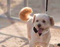 Retratos del perro Fotos de archivo
