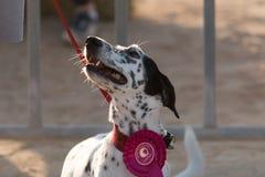 Retratos del perro Imagen de archivo