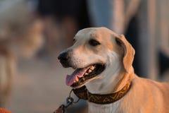 Retratos del perro Fotos de archivo libres de regalías