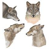 Retratos del vector del lobo foto de archivo