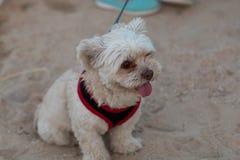 Retratos do cão imagem de stock royalty free