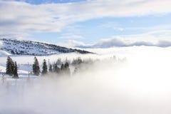 Retratos inspirados das árvores cobertas na névoa Imagens de Stock