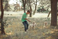 Retriever καλό αγόρι εφήβων σκηνής κουταβιών handsom που απολαμβάνει τις διακοπές θερινού χρόνου με το άσπρο κουτάβι του Λαμπραντ Στοκ Εικόνες