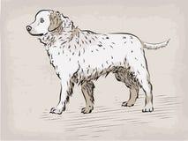 Retriever του Λαμπραντόρ σκυλιών όμορφο σοβαρό ζωικό κατοικίδιο ζώο συρμένο χέρι ι Στοκ εικόνες με δικαίωμα ελεύθερης χρήσης