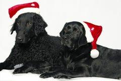Retriever com o tampão de Papai Noel Foto de Stock