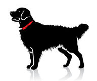 Retriever dog. Vector illustration of isolated retriever dog Royalty Free Stock Image