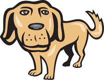 Retriever Dog Big Head Isolated Cartoon Stock Photos