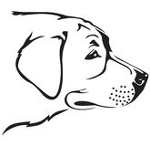 Retriever dog muzzle. Contour black-and-white image muzzle of Retriever dog Royalty Free Stock Image