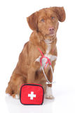 Retriever with first aid kit Stock Photos
