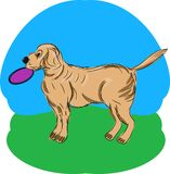 A Retriever with a Frisbee Royalty Free Stock Images