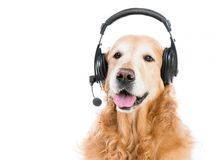 Retriever with headset Royalty Free Stock Photography
