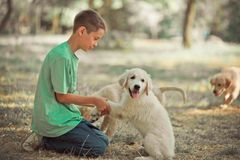Retriever pup Lovely scene handsom teen boy enjoying summer time vacation with best friend dog ivory white labrador puppy.Happy ai. Rily careless childhood life Stock Image