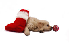 Retriever puppy isolated with christmas toys Stock Photography