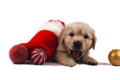 Retriever puppy isolated with christmas toys Royalty Free Stock Photos
