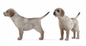 Retriever puppy isolated Stock Photo