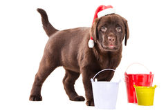 Retriever puppy with three buckets Royalty Free Stock Image