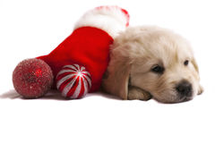 Retriever puppy on white with christmas toys Stock Photography
