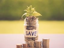 Retro abstract money saving small baby tree with glass jar Coins royalty free stock image