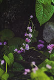 Retro achtergrond van kleine roze bloemen met groene bladeren en de boom vertakken zich op achtergrond Stock Foto