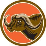 Retro afrikansk cirkel för buffelhuvudsida Royaltyfria Foton