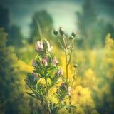 Retro ambiti di provenienza floreali disegnati Grungy Fotografia Stock