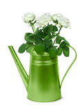 Retro annaffiatoio verde con le rose bianche Fotografie Stock