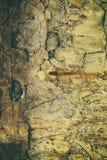 Retro antieke grungy muur, groot voor achtergrond stock afbeeldingen