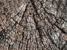 Retro antique grungy wood, great for background royalty free stock image
