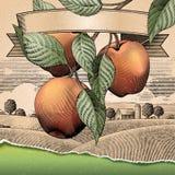 Retro appelboomgaard royalty-vrije illustratie