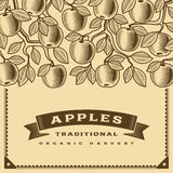 Retro apple harvest card brown Stock Image