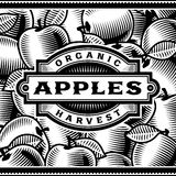 Retro Apple Harvest Label Black And White Stock Photos