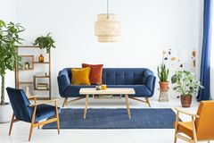 Retro armchairs with wooden frame and colorful pillows on a navy blue sofa in a vibrant living room interior with green plants. Re stock image